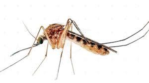 Zika virüsünden korunmanın yolları 2