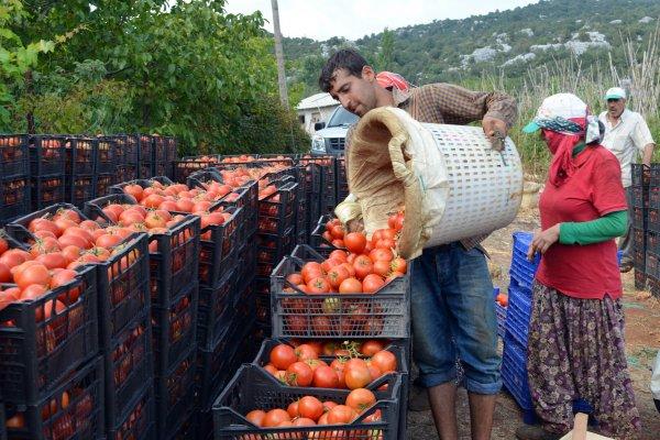 Rusya'dan Türkiye'ye domates müjdesi