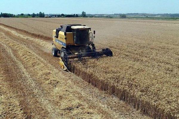 Küresel gıda fiyatları yeniden yükselişte