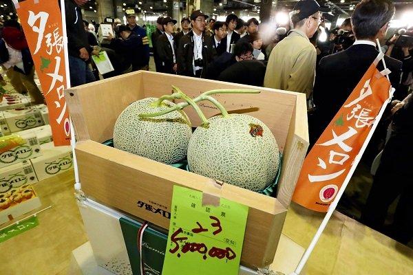 Yubari kavunlarının fiyatı 1.100 dolara geriledi