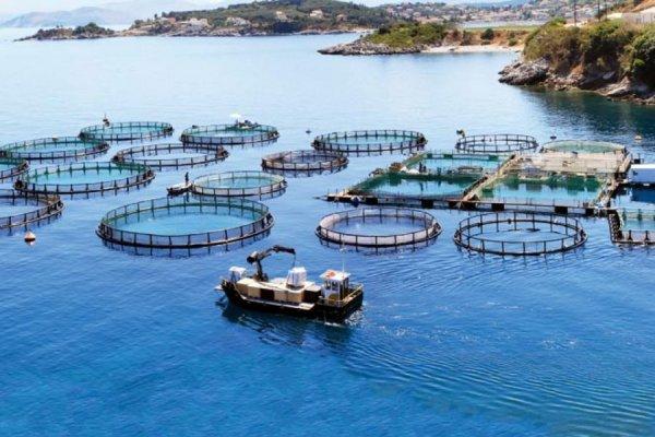 Balık çiftliklerine yeni düzenleme
