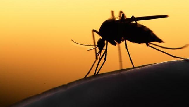 WHO Zika virüsü için toplanıyor
