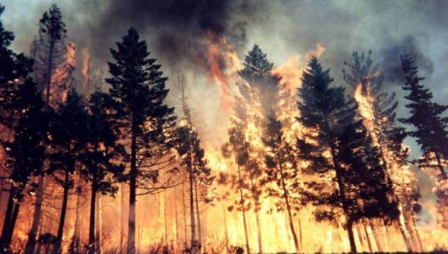 Yangın, petrol fiyatlarını yükseltti