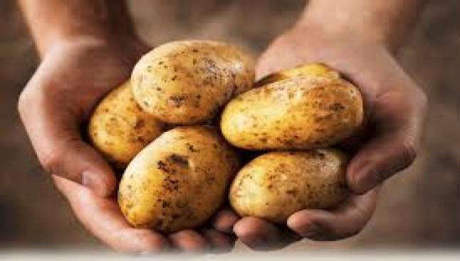 Patates Erken Alanları Sevindirdi