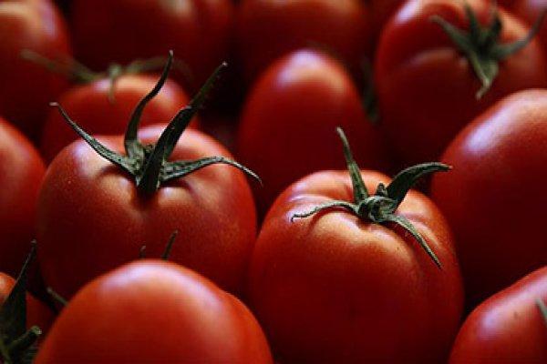 Rusya Türkiye'den domates alımı için tek şartını açıkladı