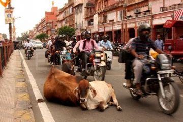 Hindistan'da banka şubesinde 1,8 milyar dolarlık dolandırıcılık