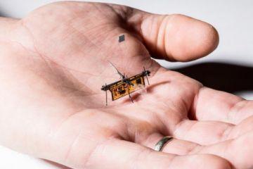 Kürdan ağırlığında robot böcek üretildi