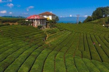 Türkiye'den 5 milyon dolarlık çay ihracatı yapıldı