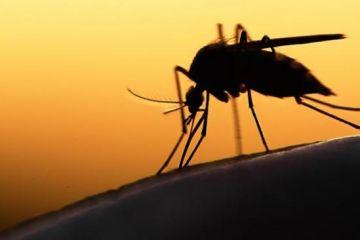 Zika virüsü 2 milyar kişiyi tehdit ediyor