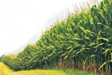 Nisanda Tarım ÜFE yüzde 21,77 arttı
