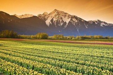 Tarımda üretici fiyatlarındaki artış enflasyona fark attı
