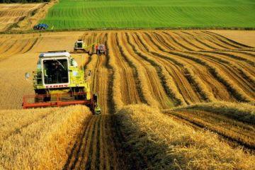 Tarım, ocakta 4,9 milyon kişiye istihdam sağladı