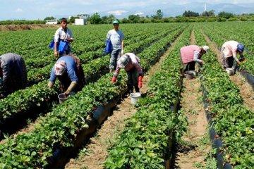 Tarım ÜFE aralıkta yüzde 2,58 arttı